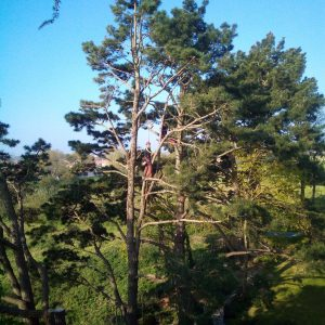 ELAGAGE DU MOULIN TILLIERES - 202104 EDM - Eduardo dans les arbres