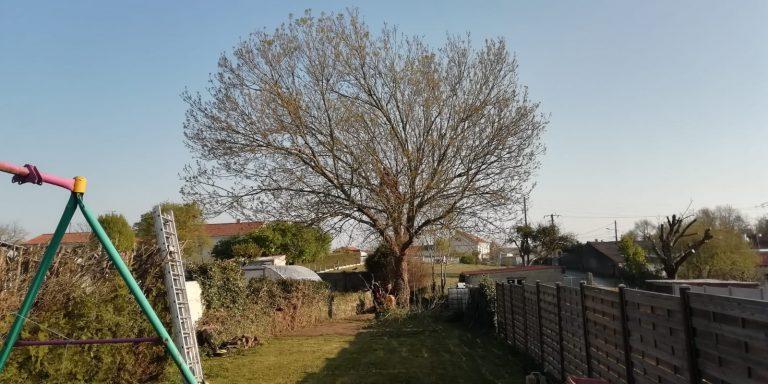 ELAGAGE DU MOULIN TILLIERES - 202104 EDM - Elagage fort - Déchirure arbre en 2 (0)