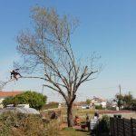 ELAGAGE DU MOULIN TILLIERES - 202104 EDM - Elagage fort - Déchirure arbre en 2 (1)