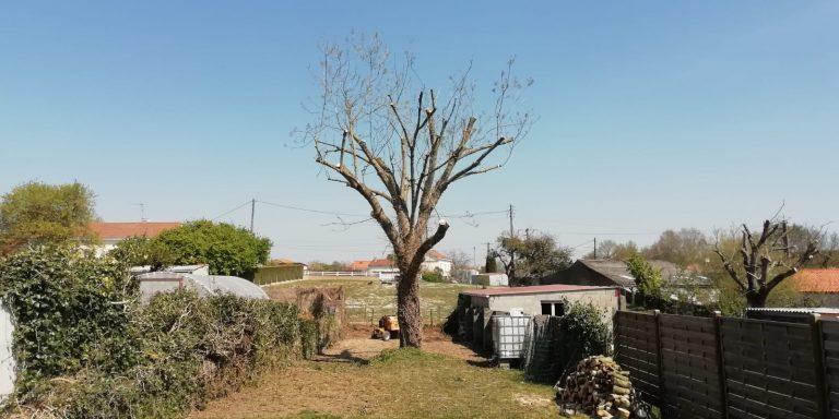 ELAGAGE DU MOULIN TILLIERES - 202104 EDM - Elagage fort - Déchirure arbre en 2 (3)