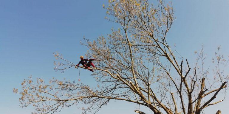 ELAGAGE DU MOULIN TILLIERES - 202104 EDM - Elagage fort - Déchirure arbre en 2 (5)