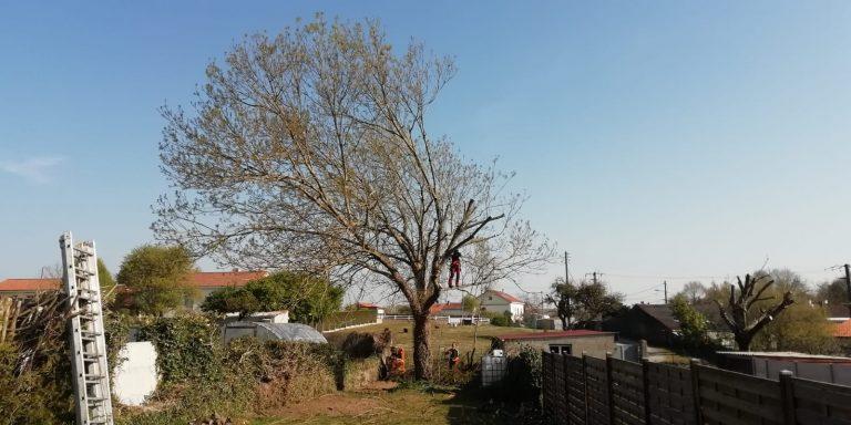 ELAGAGE DU MOULIN TILLIERES - 202104 EDM - Elagage fort - Déchirure arbre en 2